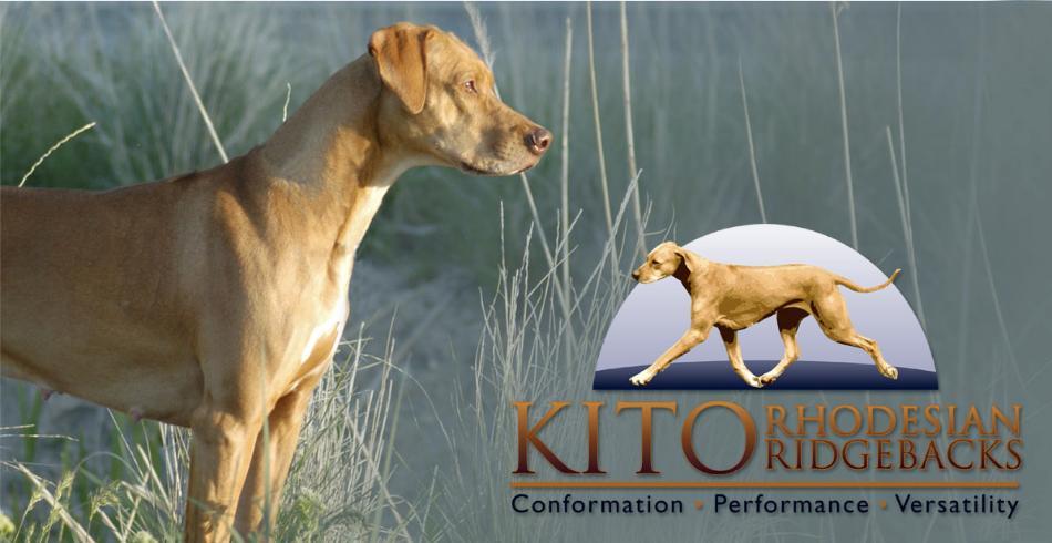 Kito Ridgebacks